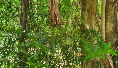 Загатка: Пронајдете ја змијата која се крие меѓу лисјата