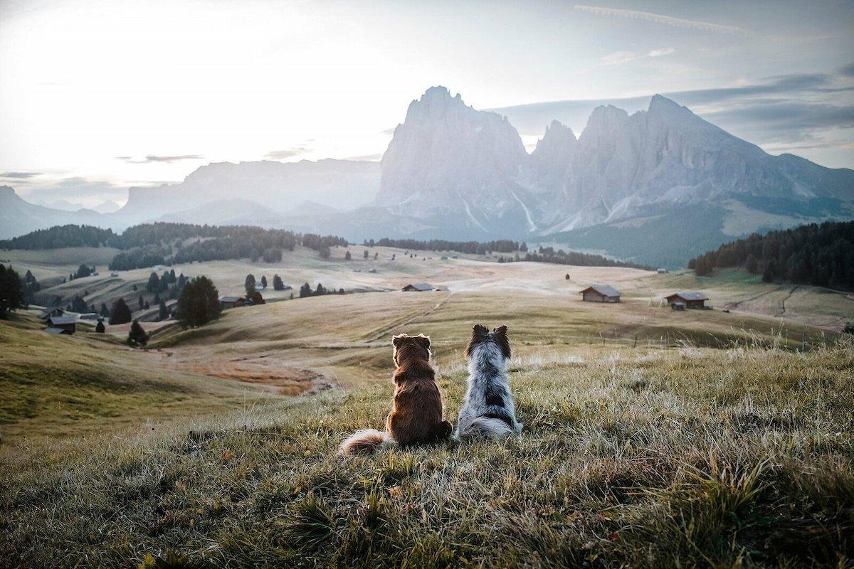 Фотографка патува со своите кучиња откако ги спаси од улиците на Романија