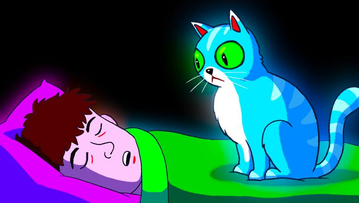 5 работи на кои треба да внимавате кога ја оставате мачката во вашиот кревет