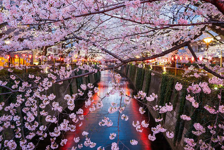 Прекрасни фотографии од расцветани дрвја