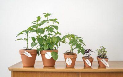 Наместо цвеќе, оваа сезона засадете овошје и зеленчук на балконот