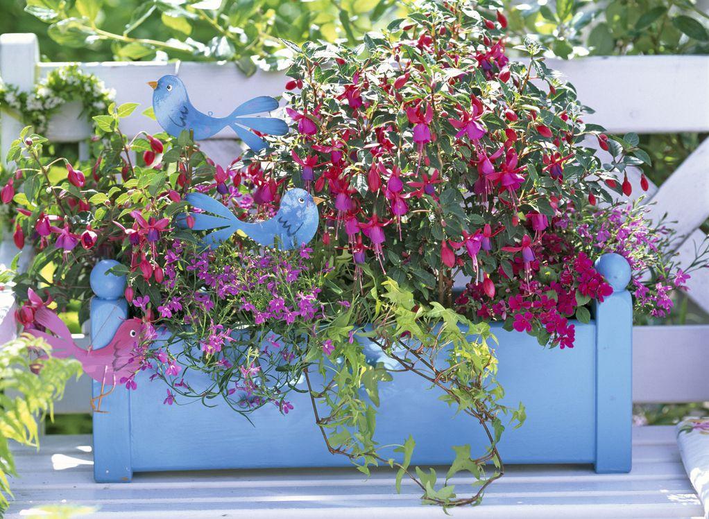 Пет балконски убавици што повеќе сакаат сенка отколку сонце