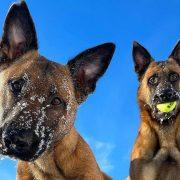Ова се најздравите раси кучиња во светот