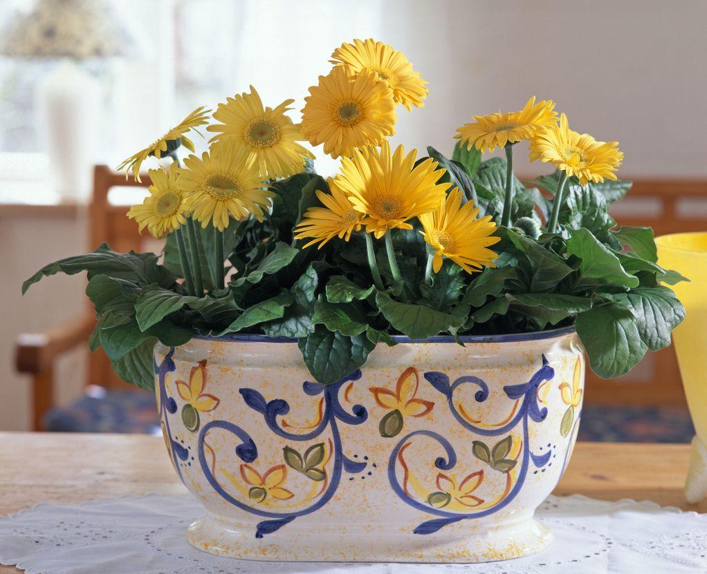 Гербери - цвеќиња создадени за најслатките букети