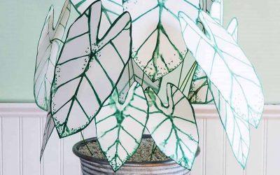 Каладиум е украсно растение што се вклопува во секој ентериер