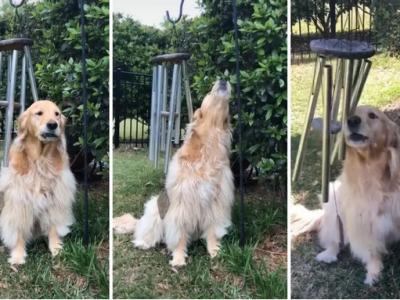 Сензација на ТикТок: Ова куче ужива во звукот на ѕвончињата на ветрот