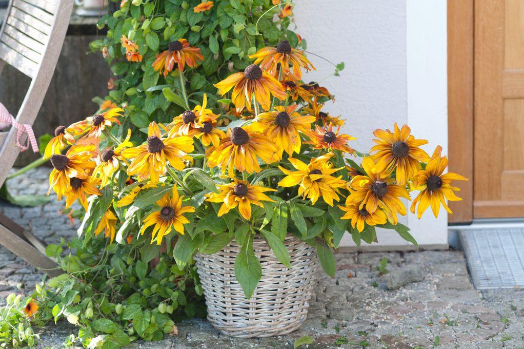 3 цвеќиња што нема да замерат ако заборавите да ги наводнувате