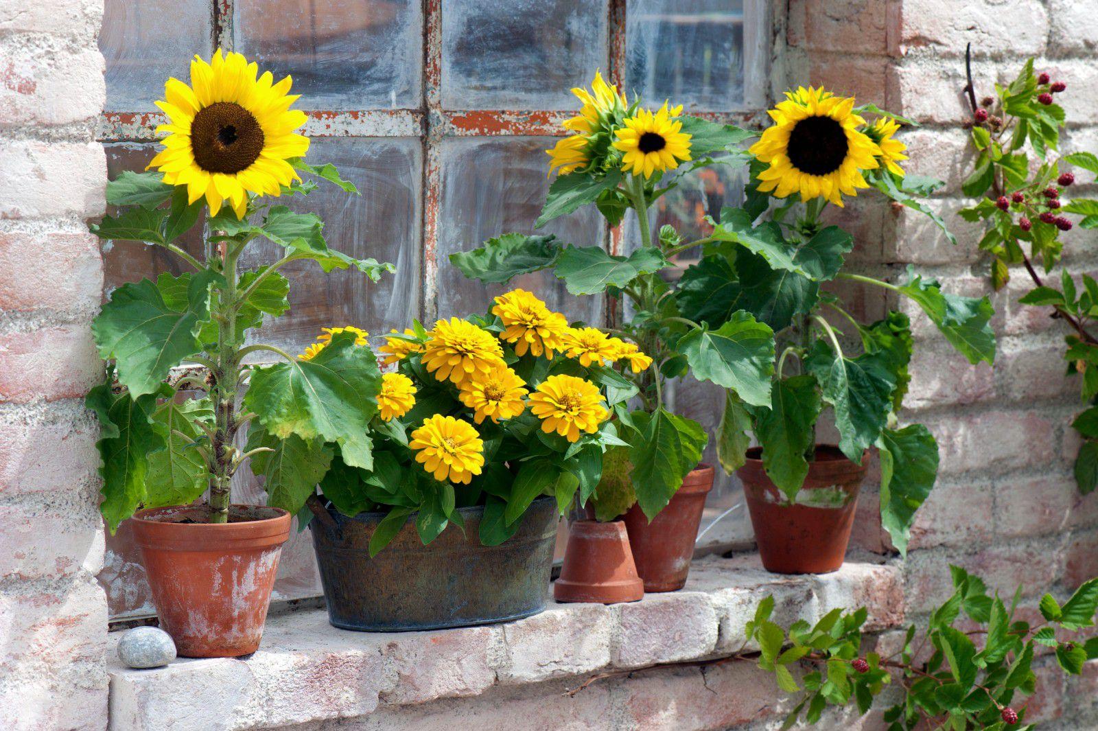 Растенија што можете да ги садите во јуни за вашиот мирислив летен балкон