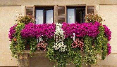 Соодветна грижа: Како вашите растенија на балконот да го преживеат летото?