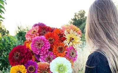 За градина полна со бои и мириси: 10 видови цвеќиња што цветаат во текот на целото лето