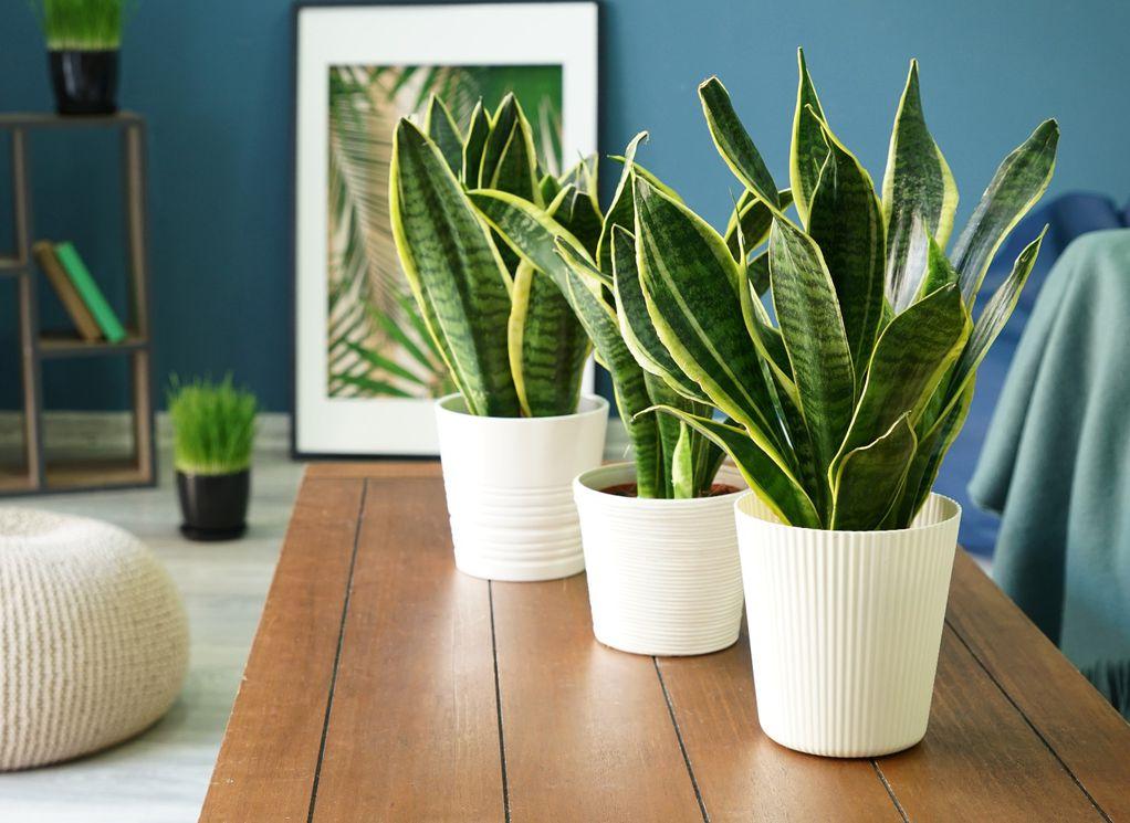 5 растенија што ќе успеат дури и ако ќе ги запоставите