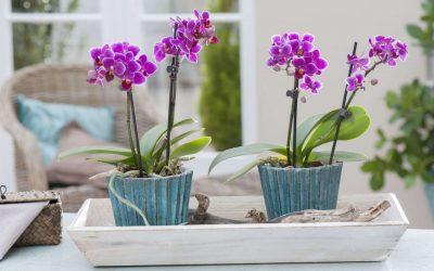 Може да го оштетат коренот на орхидеите: 3 грешки што ги правите во текот на летото