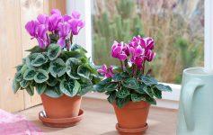 Фенг шуи: 3 растенија кои ќе ја привлечат вашата сродна душа