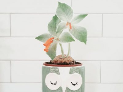 Плишено растение што ќе го украси секој ентериер
