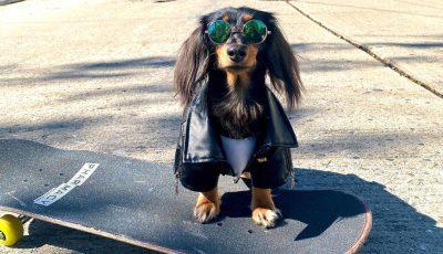 """Професионален """"скејтер"""": Ова куче има необично хоби"""