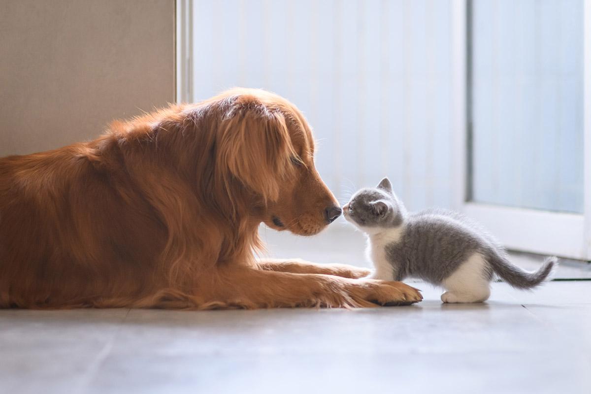 Потребата за маче или куче има длабоко космичко значење